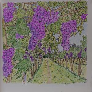 大人のスケッチ塗り絵6 ピエモンテのぶどう畑