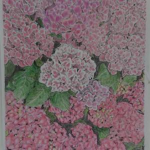 写真de塗り絵館4 白山神社のアジサイ