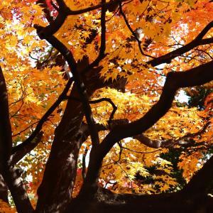 札幌都心の隠れた紅葉の名所・道庁前庭