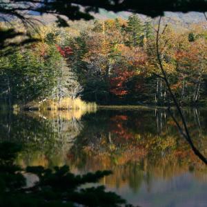 「紅葉の水鏡」知床五湖の二湖で撮影した秋の風景