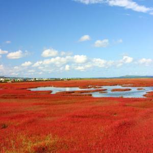 湖畔が真っ赤に染まる。網走市卯原内の能取湖畔・サンゴ草の紅葉