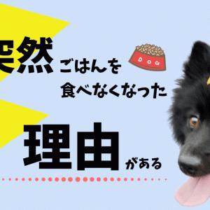 犬がご飯を食べない理由!食いつきが悪い?意外な原因と対処法