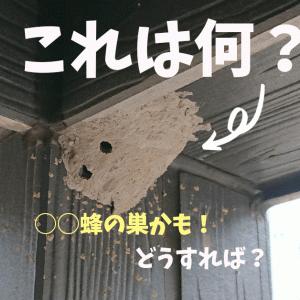 【画像】これ何の巣?土の塊はドロバチかも!危険?駆除する方法