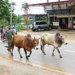 【ミャンマー旅行記 3日目前半】最終目的地ペデ(Pe Det)に到着