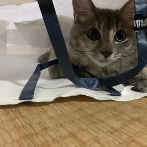 猫が狭い所が好きな理由