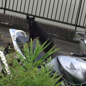 ばあちゃん家の猫ジジ①