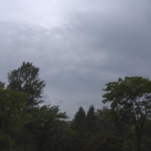 パラっと雨