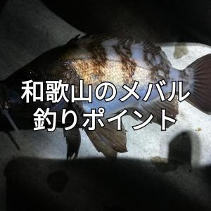 【2020年版】和歌山のメバル釣りポイント7選