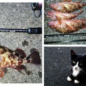 【京都】養老漁港にてカサゴが釣れました。(2021年7月中旬)