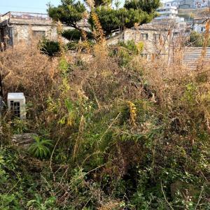 便利屋 | 何でもお助けサービス お庭の草むしり代行