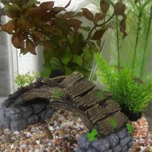 川魚の水槽レイアウトしてみました!