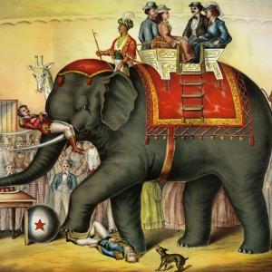 パリ、サーカスで野生動物の使用禁止/日本の対応は?娯楽のための動物虐待の事実