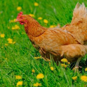畜産業が禁止に?人口の3割が食肉消費を減らしたスイスの国民投票