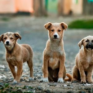 ソウルが食肉用の犬の屠殺を終了/かわいそうなのは犬だけ?