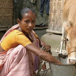 バングラデシュ牛乳売上40%減/抗生物質とスーパーバグの恐怖