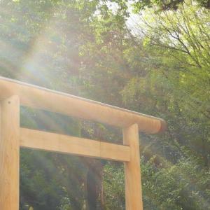 初詣中に参道100段目から転落、77歳男性死亡
