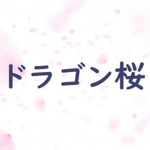 「ドラゴン桜」9話あらすじネタバレ・運命の共通テストの結果は?