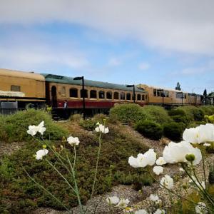 【アメリカ】Napa Valley Wine Train ♪~ナパのワイン列車と予約方法~