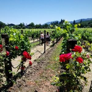 【アメリカ】カリフォルニアのワイン旅行  ☆ NapaとSonoma 観光とワイナリー