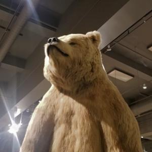 【アラスカ】フェアバンクスの観光名所と見どころ5選