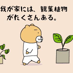 お花の定期便 bloomee