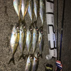 1時間で何匹釣れるか!?結果発表 アジング 大分県