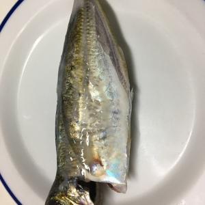 [料理編]アジの塩麹焼き、焦げた・・・ 琉球丼うまし! 大分県