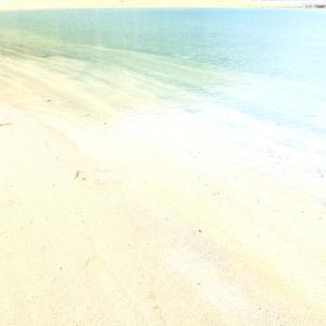 蜜を避けて浜辺に、そこで発見したのは!大分県