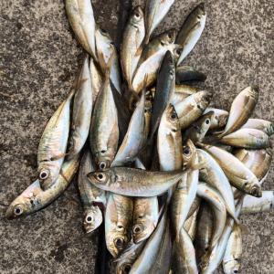 [料理編]アジが大量に釣れたら絶品アジ料理をお勧めします! 大分県