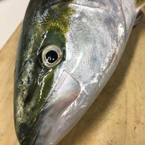 釣り人が、魚を買わずに釣りをする本当の理由 アジング メバリング ショアジギング 大分県