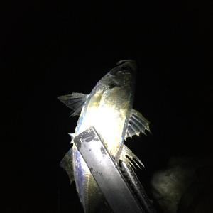 小雨のアジング釣行