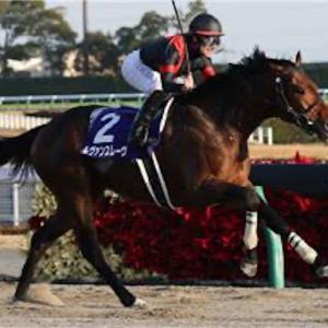 チャンピオンズカップ 枠順確定後 見解 絶対来る馬はこの馬です。