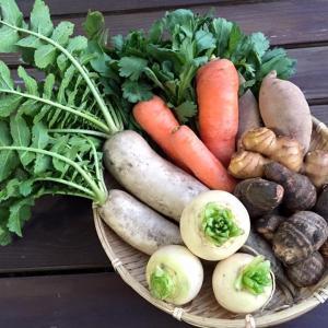 無農薬野菜の良さ
