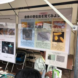 弥富での金魚日本一大会にて