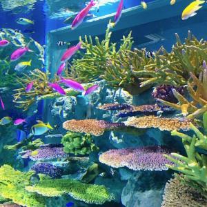 那覇空港近くにできた新スポット「DMMかりゆし水族館」へ行ってみた