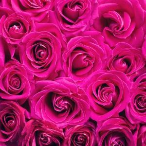 結婚記念日にお花を贈ろう!花言葉を理解して贈るオススメの花7選!