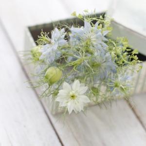 花のサブスクおすすめ13社を徹底比較!花の定期便で暮らしに彩りを!