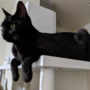 猫トイレの上はデッドスペースと思っちゃいないか?