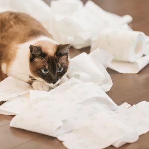 【猫の留守番】留守番は好き?嫌い?