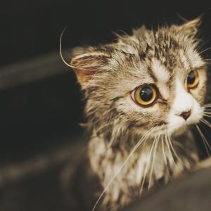 【必要?必要なし?】猫のお風呂