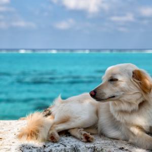 犬と猫 一緒に飼うときの注意点