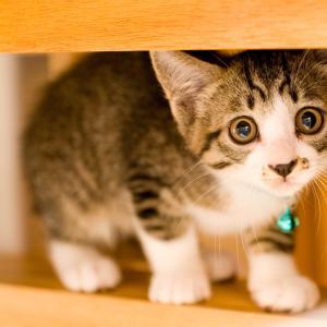 子猫がほしいなら今すぐチェック!