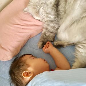 猫は赤ちゃんが好き