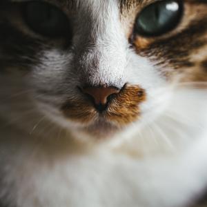 切ったら絶対ダメ!ネコのひげの重要な役割
