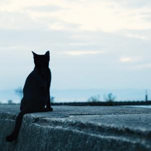 【過酷】野良猫の世界