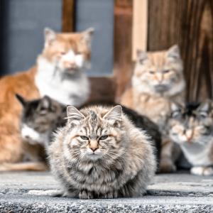 【猫の不思議】本当にあったネコの集会