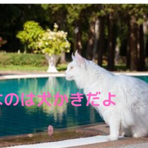【猫の不思議】泳ぐ猫ヴァン猫