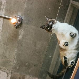 【必要?】猫にキャットタワーは必要ない