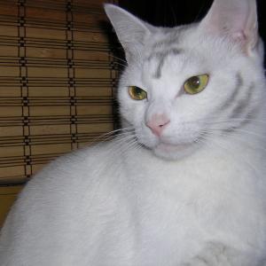 【猫のしつけ】飼い主がすることはたった3つ
