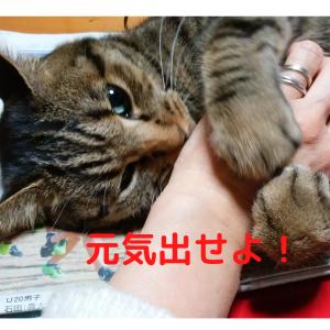 猫がなぐさめてくれるって本当?